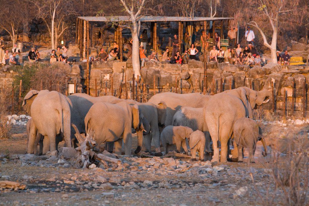 Win Namibia Wildlife Resorts