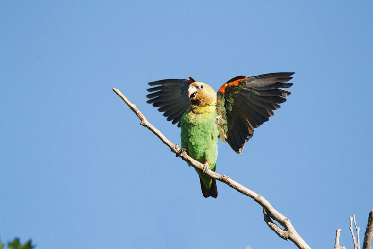 Tracking Cape Parrots through Hogsback's beautiful forests