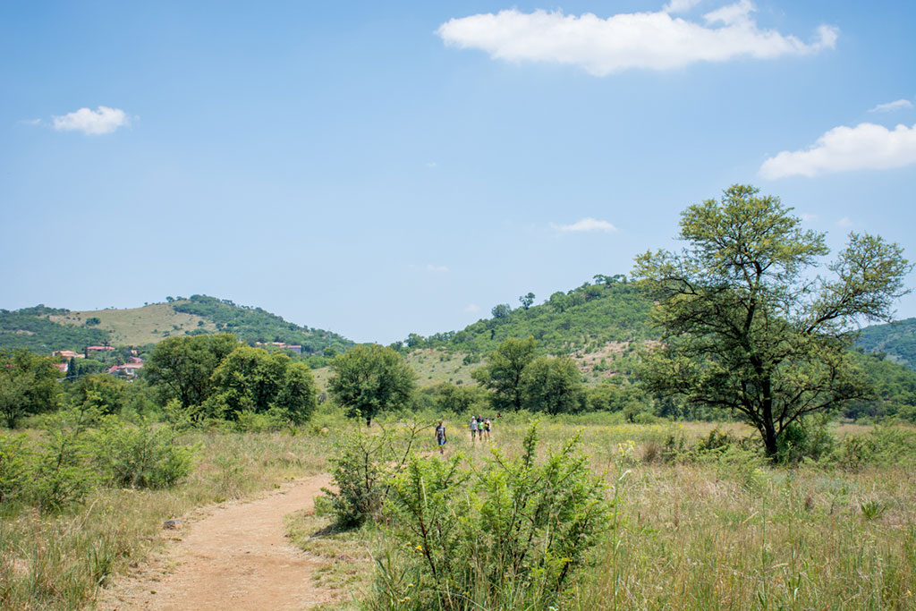 6 ways to feel closer to nature in Joburg